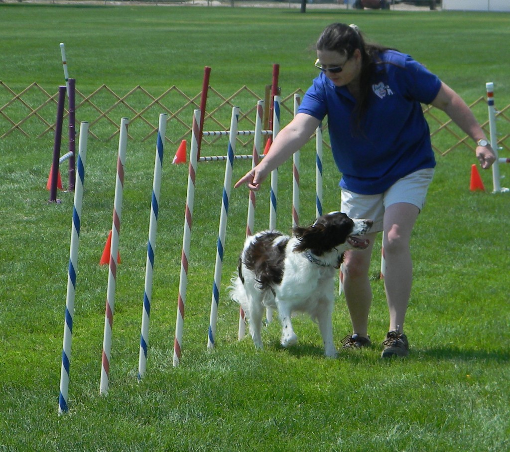 how to make a dog obstacle course